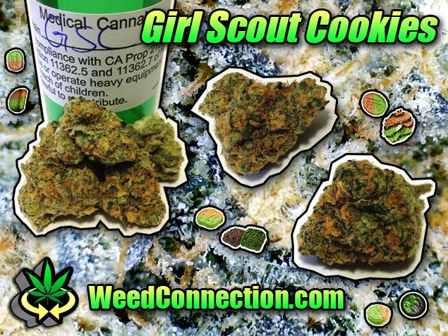girlscoutcookiez weedconnection